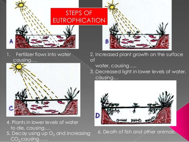 Eutrophication process steps
