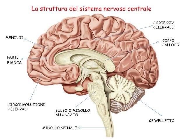 Il cervello tra le gambe 2002 full italian movie 4