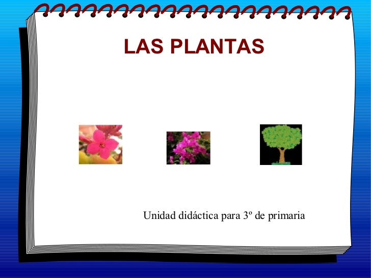 LAS PLANTAS Unidad didáctica para 3º de primaria