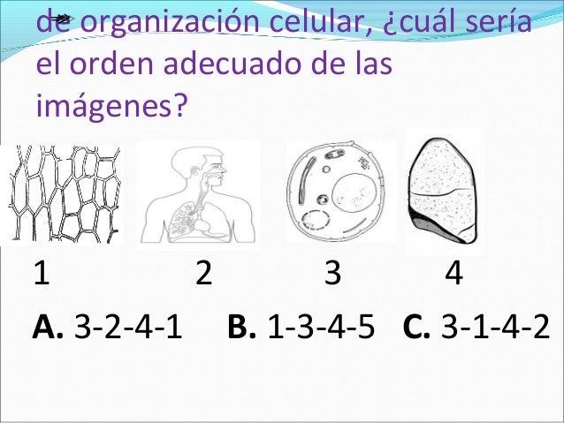 Evaluación ciencias naturales. La celula y sistema digestivo grado 4°