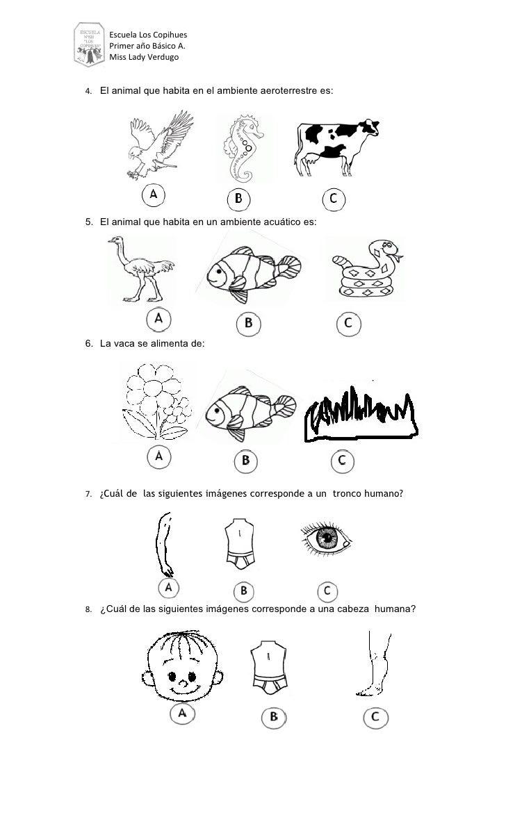 Escuela Los Copihues     Primer año Básico A.     Miss Lady Verdugo4. El animal que habita en el ambiente aeroterrestre es...