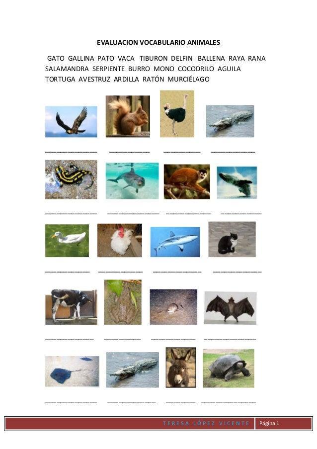 T E R E S A L Ó P E Z V I C E N T E Página 1 EVALUACION VOCABULARIO ANIMALES GATO GALLINA PATO VACA TIBURON DELFIN BALLENA...