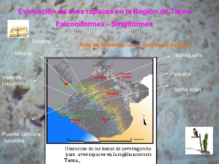 Evaluación de aves rapaces en la Región de Tacna Falconiformes - Strigiformes Area de investigación y materia de estudio I...