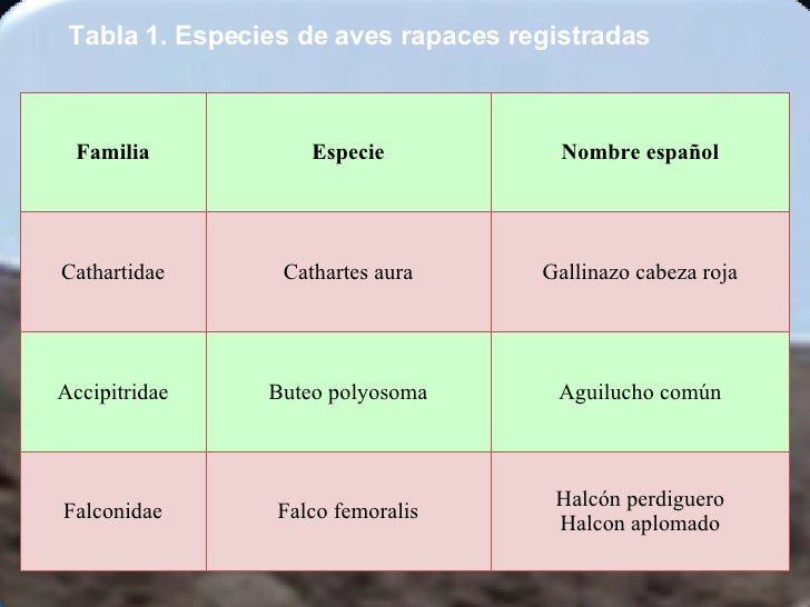 Tabla 1. Especies de aves rapaces registradas   Halcón perdiguero Halcon aplomado Falco femoralis Falconidae Aguilucho com...
