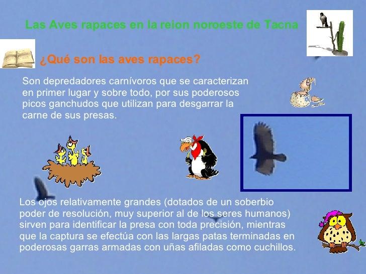Las Aves rapaces en la reion noroeste de Tacna Son depredadores carnívoros que se caracterizan en primer lugar y sobre tod...