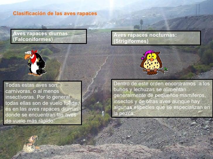 Clasificación de las aves rapaces Aves rapaces diurnas: (Falconiformes)   Aves rapaces nocturnas: (Strigiformes)   Todas e...