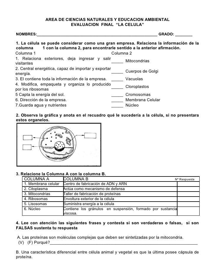 """AREA DE CIENCIAS NATURALES Y EDUCACION AMBIENTAL                          EVALUACION FINAL """"LA CELULA""""  NOMBRES:__________..."""