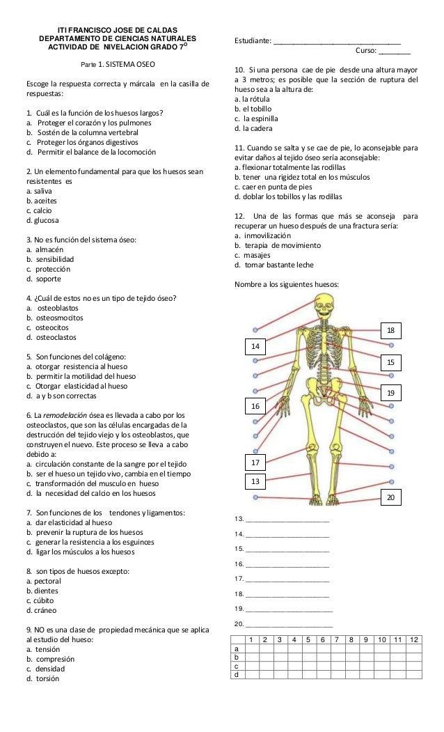 Evaluacion: sistema óseo