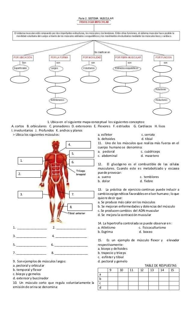 Evaluacion sistema muscular