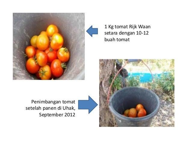 Evaluasi hasil percobaan tanaman sayuran di lurang sept 2012 34 ccuart Images