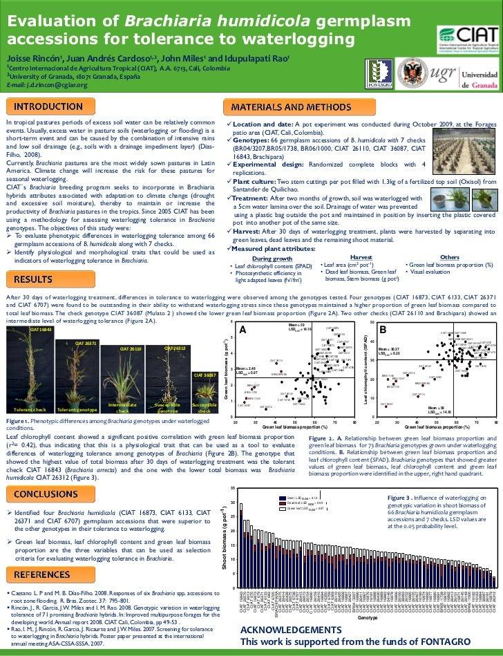 Evaluation of Brachiaria humidicola germplasm accessions for tolerance to waterlogging Joisse     Rincón1,       Juan Andr...