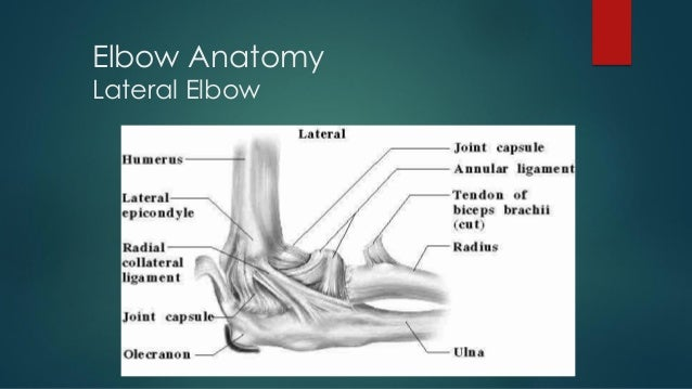 PS SESSION : ELBOW WRIST AND HAND EXAMINATION PART 1 Slide 3