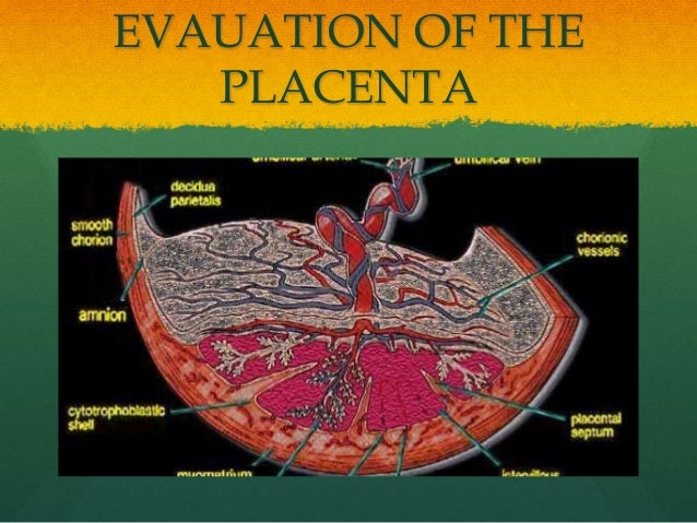 EVAUATION OF THE PLACENTA
