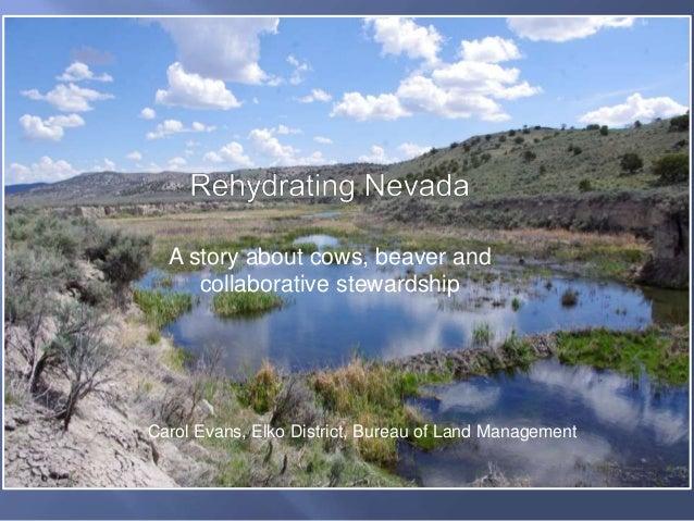 A story about cows, beaver and collaborative stewardship Carol Evans, Elko District, Bureau of Land Management