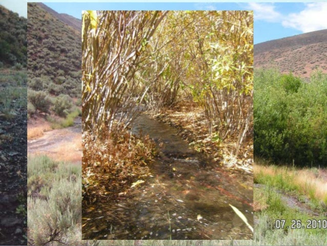 Maggie Susie 396 mi2 180 mi2 Partners BLM Maggie Creek Ranch TS Ranch Newmont Mining Co. Barrick Goldstrike Mines Trout Un...