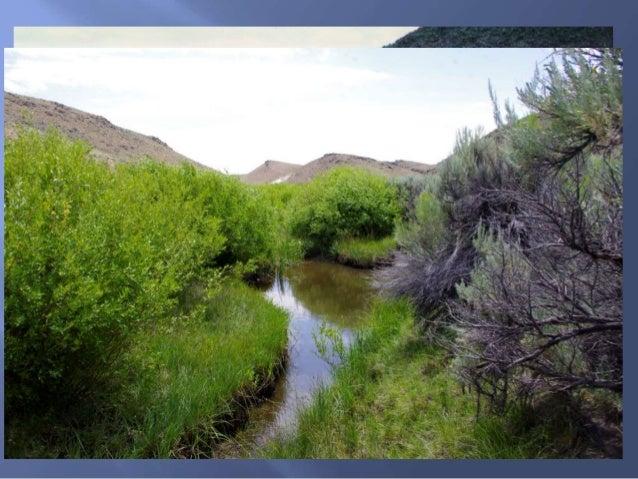 Maggie Creek, 2012 Maggie Basin