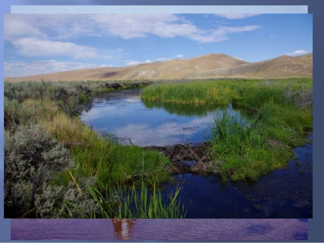 Susie Creek Basin Remote Sensing Project Over the past 20-30 years; Riparian vegetation increased by 100ac Beaver dams wen...
