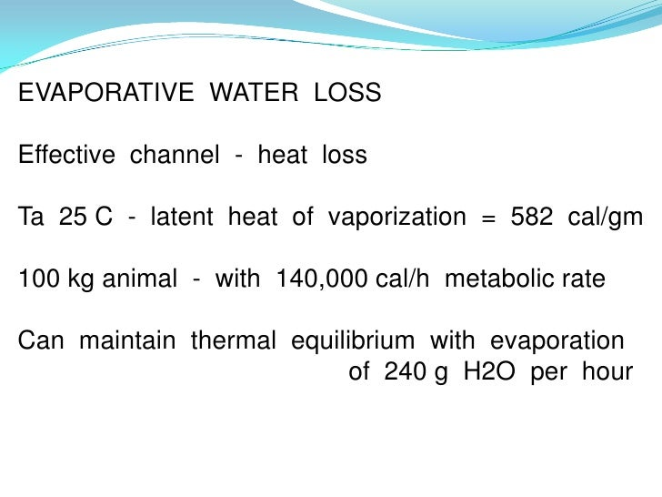 EVAPORATIVE WATER LOSSEffective channel - heat lossTa 25 C - latent heat of vaporization = 582 cal/gm100 kg animal - with ...