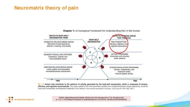 Moseley, G. L., Parsons, T. J., & Spence, C. (2008). Visual distortion of a limb modulates the pain and swelling evoked by...