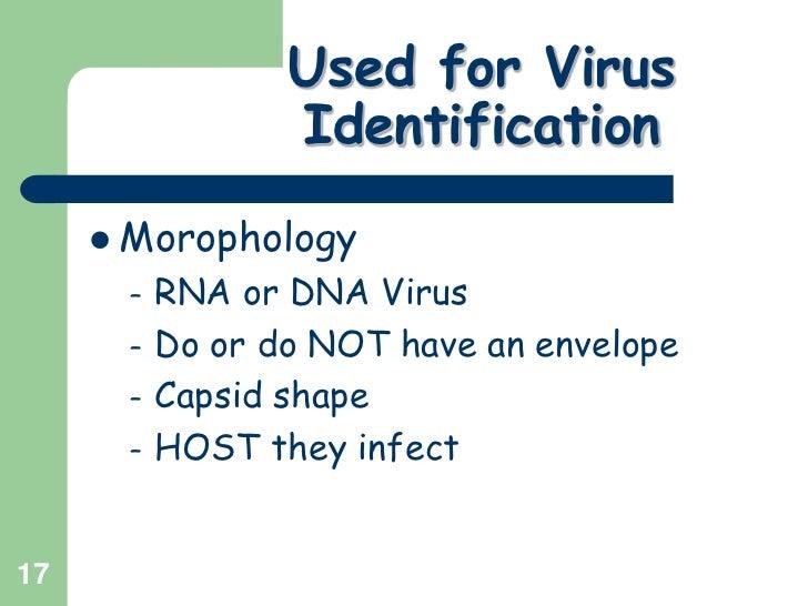 17<br />Used for Virus Identification<br />Morophology<br />RNA or DNA Virus<br />Do or do NOT have an envelope<br />Capsi...
