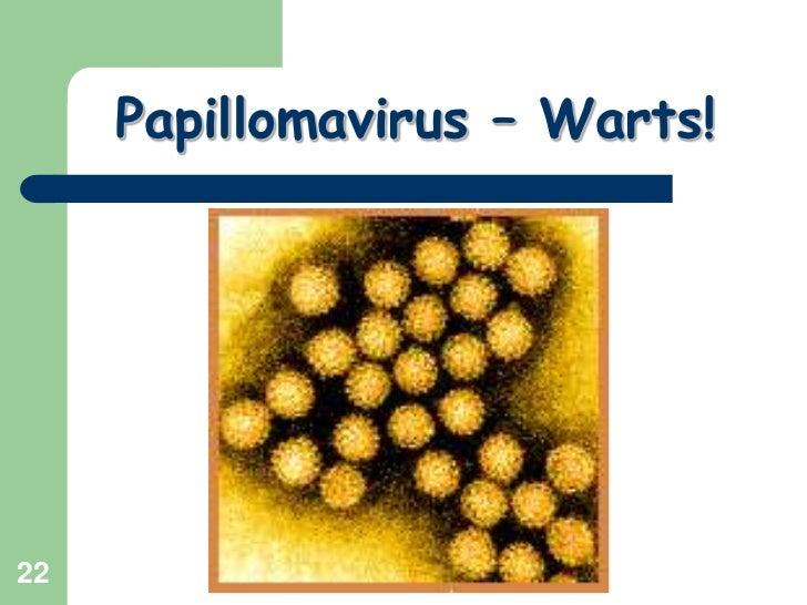 22<br />Papillomavirus – Warts!<br />