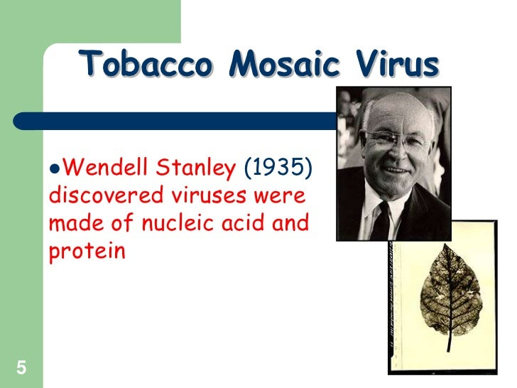 Plant virus ppt slide share.
