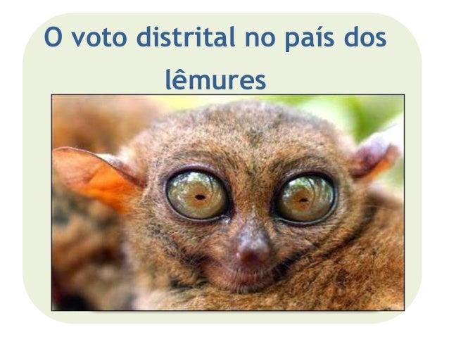 O voto distrital no país dos lêmures