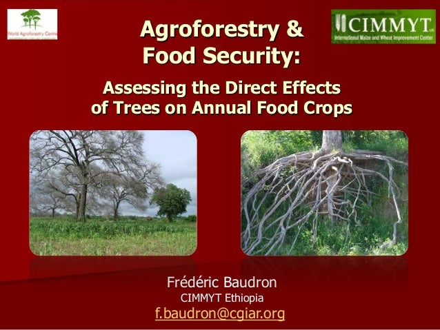Frédéric Baudron CIMMYT Ethiopia f.baudron@cgiar.org Agroforestry & Food Security: Assessing the Direct Effects of Trees o...