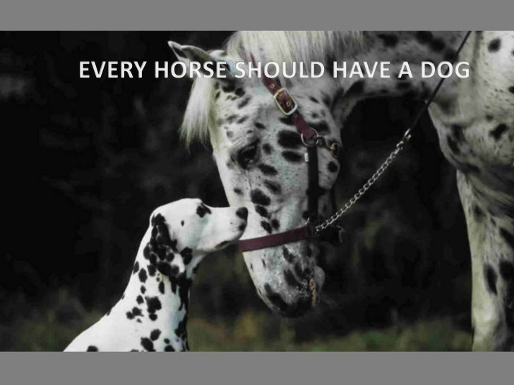Every horse should have a dog