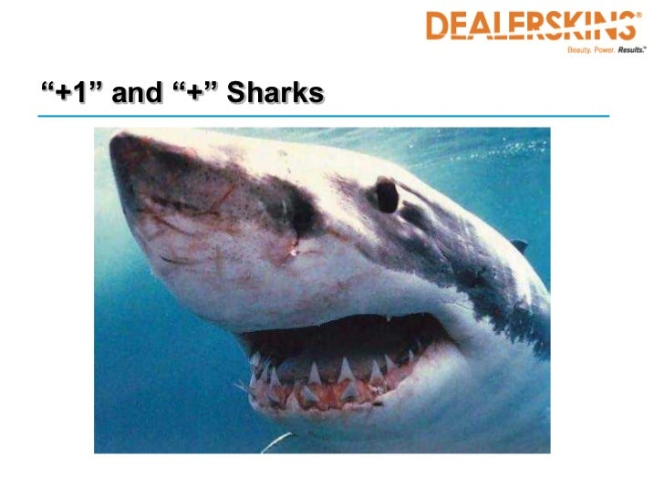 """""""+1"""" and """"+"""" Sharks"""