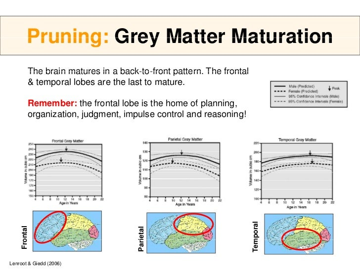 Prefrontal Maturation Cortex Of