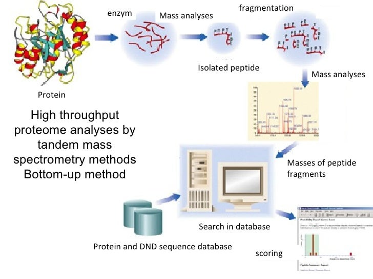 di ms technique for analyzing protein and peptide sequences Sequence analysis of proteins and peptides is not limited to the elucidation of   trometry as a result of more efficient ionization techniques and bet- ter detection   that glycosylation in procaryotes combines a much greater di- versity of glycan .