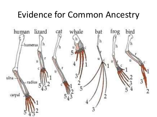 Evidence for common ancestors