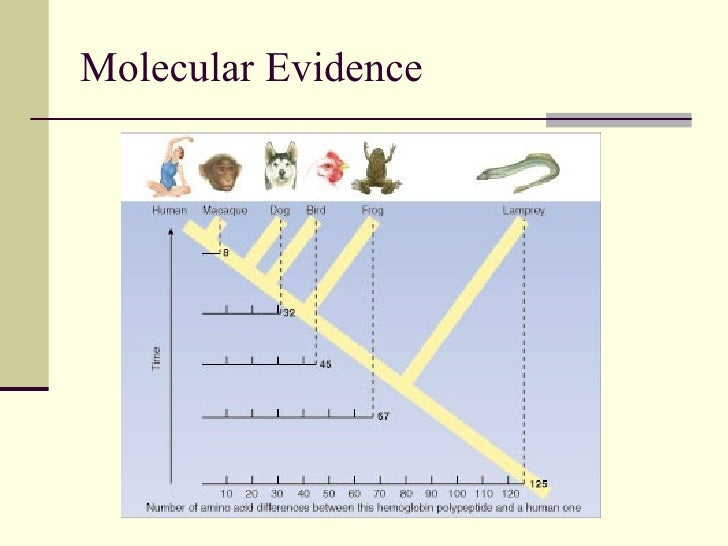 what is the evidence for evolution Human evolution is the lengthy process of change by which people originated from apelike ancestors scientific evidence shows that the physical and.