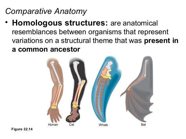 How Does Anatomy Provide Evidence For Evolution
