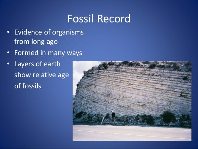 Formation of Fossils A compression fossil is a fossil preserved in sedimentary rock that has undergone physical compressio...