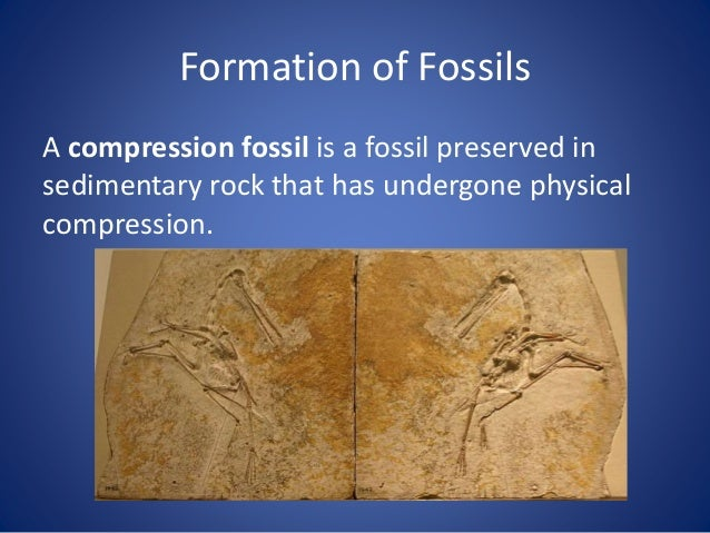 Formation of Fossils Petrification is the process by which organic material is converted into stone through the replacemen...