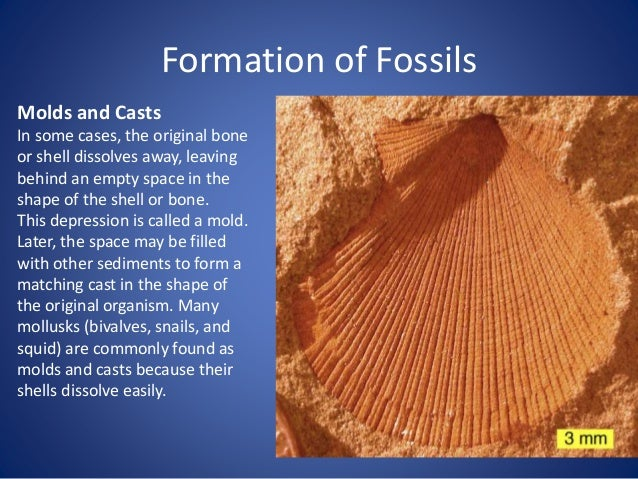 Formation of Fossils Oozing tree sap can trap insects. When the sap (or resin) fossilizes, it becomes amber.