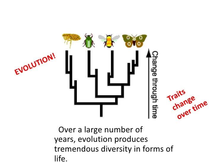 Evidence of evolution ss