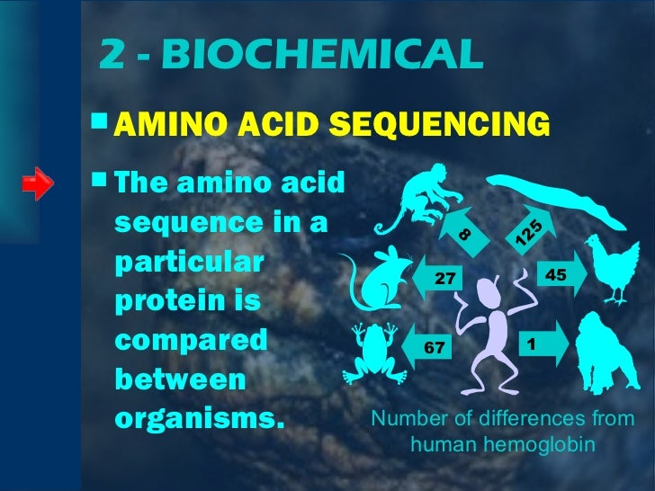 2 - BIOCHEMICAL <ul><li>AMINO ACID SEQUENCING </li></ul><ul><li>The amino acid sequence in a particular protein is compare...