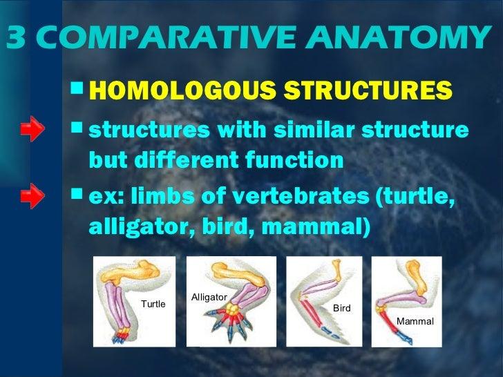 3 COMPARATIVE ANATOMY <ul><li>HOMOLOGOUS STRUCTURES </li></ul><ul><li>structures with similar structure but different func...