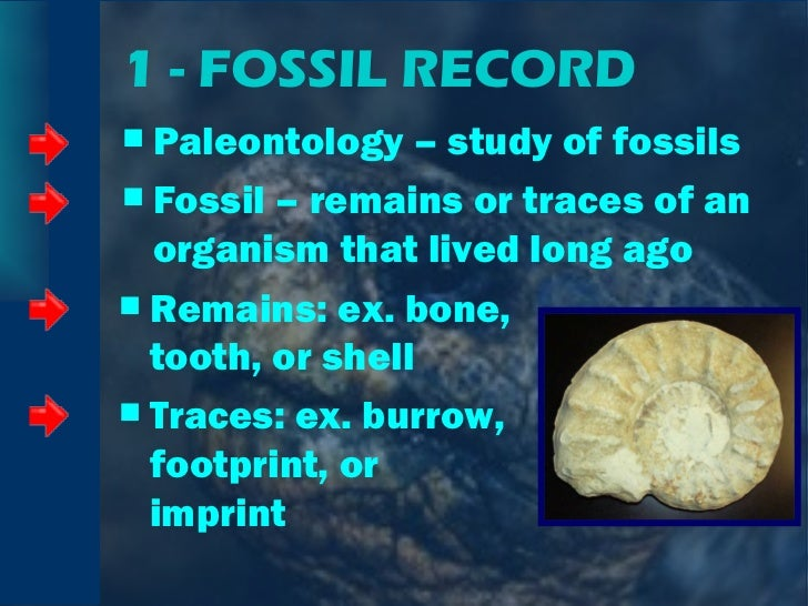 1 - FOSSIL RECORD <ul><li>Paleontology – study of fossils </li></ul><ul><li>Fossil – remains or traces of an organism that...