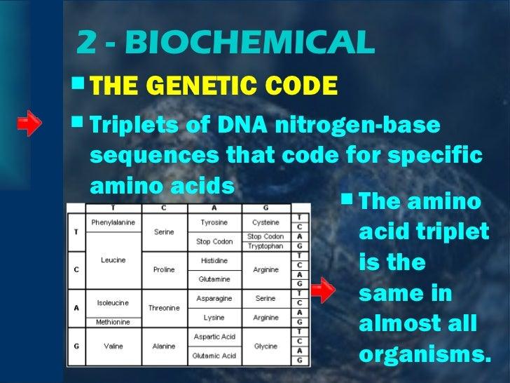 2 - BIOCHEMICAL <ul><li>THE GENETIC CODE </li></ul><ul><li>Triplets of DNA nitrogen-base sequences that code for specific ...