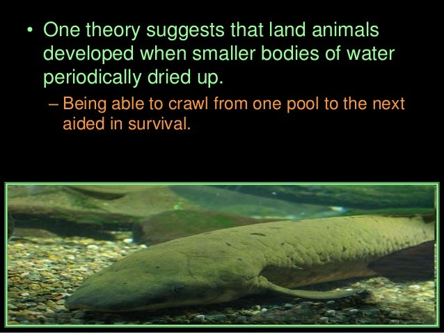 • Which picture below is a tetrapod?