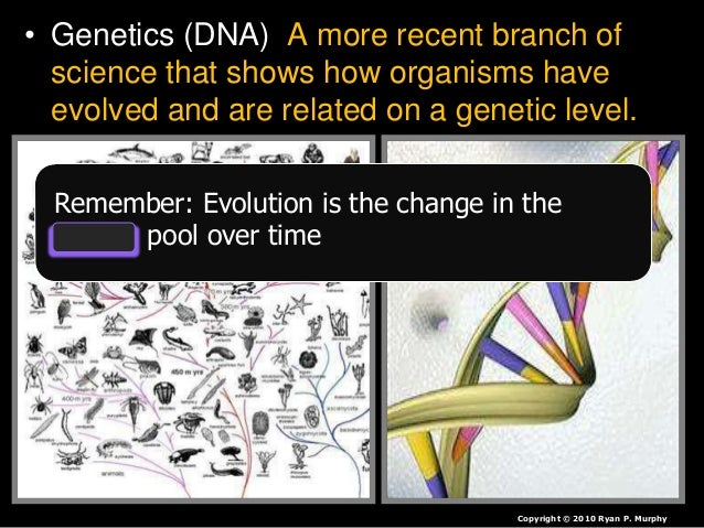 • Evolution is the change in the gene pool overtime. – Gene Pools can change when… – Populations can shrink • Diseases, ex...