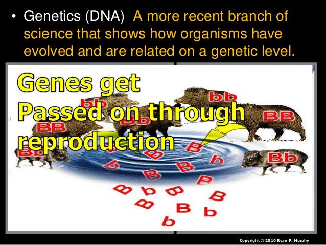 • Scientist look at the genes in a DNA molecule (It is in all of our cells). – DNA provides a unique marker. Copyright © 2...