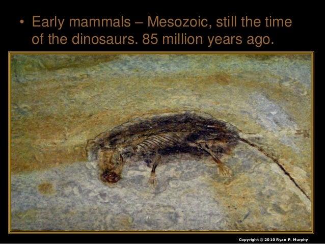 • Earliest Primate fossil: 47 million years ago. Copyright © 2010 Ryan P. Murphy