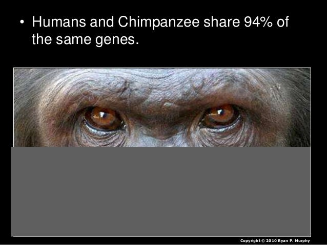 • Don't look at humans as just coming from apes. – We are one stem on a giant tree of primates that share a common ancesto...
