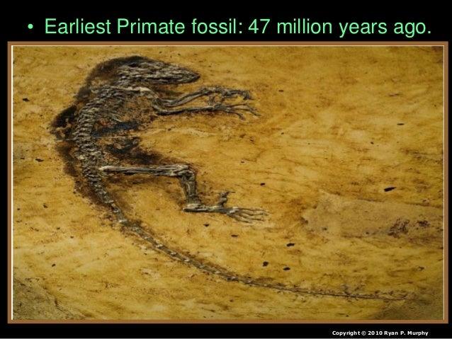 • Hominid fossil – 3.2 million years ago. Copyright © 2010 Ryan P. Murphy