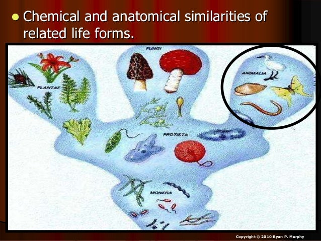  Chemical and anatomical similarities of related life forms. Copyright © 2010 Ryan P. Murphy
